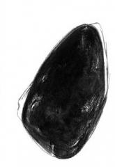 tache-noire(1).jpg